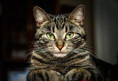 118 meilleures images du tableau Ivy et Pinoux   Dog cat, Pets et Cats a18f0919f65d