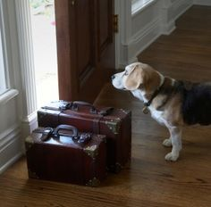 This is a fabulous website for any type o smell.......How to get dog smell out of house