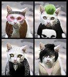 Culture Cats