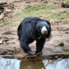 bruno der #nasenbär #zooleipzig