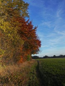 A magnificent autumn in the north Cotswolds with brilliant leaf colour after a warm , dry summer ideal of country walking. Leaf Coloring, Country Roads, Autumn, Summer, Summer Time, Fall, Verano