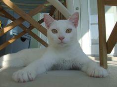 Nubby Rulez All! Submissive, Cats, Animals, Gatos, Animales, Animaux, Animal, Cat, Animais