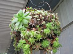 Beautiful Egg Basket that my mom planted with Succulents (Hens & Chicks).  She stores this in the garage for winter and brings it back out for Spring/Summer.