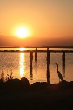 Salton Sea at Sunset used to go fishing here alot with my dad. its really a big salty lake