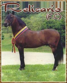 Horse Caballo, Puerto Rico History, Horse Breeds, Beautiful Horses, Animals And Pets, Joseph, David, Horses, Nature