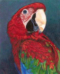 Colored Pencil Paintings Cleveland Ohio Joanne Greg Meyer Oil Pastel At Last Alpacas Watercolor Painting Woodcarving Woodburning Knitting Antler Art Calendar Art Shawls Scarves