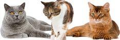 Katten; handige tips voor kattenliefhebbers