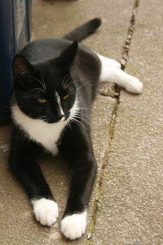 My Boy! Kit. Tuxedo cat!