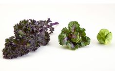 When Kale and Brussels Sprouts Combine #vegan #vegetarian #glutenfree #food #GoVegan #organic #healthy #RAW #recipe #health #whatveganseat