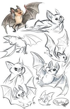 http://sharkie19.deviantart.com/art/Vampire-Bats-503728080  Bat Character Design - Model sheet