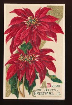 Beautiful Antique Embossed Chrismas Postcard Poinsettia John Winsch-ppp347 #Christmas
