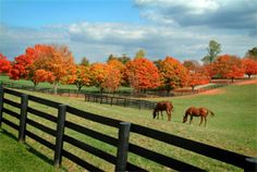 Fall in KY