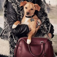 Pin for Later: Ariana Grande's Dog Toulouse Is the New Coach Pups Campaign Star
