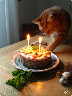 A Birthday Cake For Your Cat So Its Just Wet Cat Food Topped On - This cat eating a birthday cake is everything you need in life