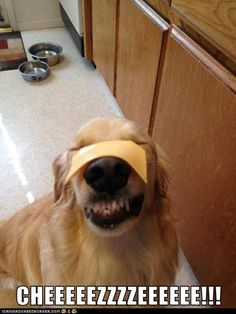 Cheeeezzzzeeeee!!!!! If you love dogs, check out http://thedogbreedsbible.com/