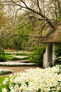 "The Netherlands - ""Keukenhof, Holland"" by Natali Antonovich Beautiful World, Beautiful Gardens, Beautiful Places, Visit Holland, Gardens Of The World, Public Garden, White Gardens, Parcs, Dream Garden"