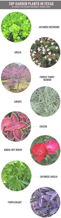 Gardening in Texas: Top Hardy and Drought-Tolerant Plant Recommendations for Texas Landscapes