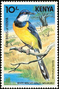 Stamps showing White-winged Apalis Apalis chariessa, with distribution map showing range West Art, Bird Theme, Rare Birds, White Wings, Vintage Stamps, African Animals, Stamp Collecting, Kenya, Pet Birds