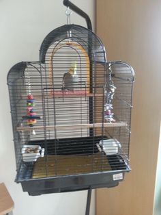 Cockatiel bird cages for sale in bangalore dating