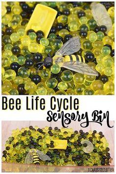 Sensory Rooms, Sensory Bags, Sensory Table, Sensory Bottles, Sensory Play, Sensory Diet, Autism Sensory, Bee Activities, Preschool Activities