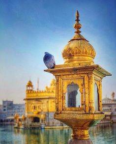 Image may contain: sky, outdoor and water Guru Nanak Wallpaper, Guru Nanak Ji, Harmandir Sahib, Indian Temple Architecture, Shri Guru Granth Sahib, Golden Temple Amritsar, Guru Gobind Singh, Temple India, Amazing India