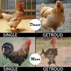 Evliliğin Komik Etkisi, Funny Images, Photos Online, Funny Jokes, is a funny way in life!