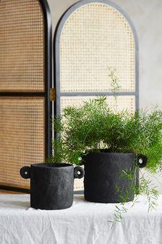 Black Plant Pots at Rose & Grey Plant Pots, Potted Plants, Bunch Of Flowers, Dried Flowers, Elements Of Nature, Black Cement, Succulent Care, Botanical Prints, Interior Inspiration