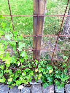 Pin on Garden/Outdoors Pin on Garden/Outdoors Garden Trellis, Garden Fencing, Garden Paths, Diy Fence, Large Flowers, Summer Garden, Outdoor Projects, Garden Planning, Backyard Landscaping