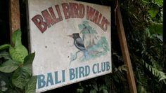 Ornithological pursuits, Ubud