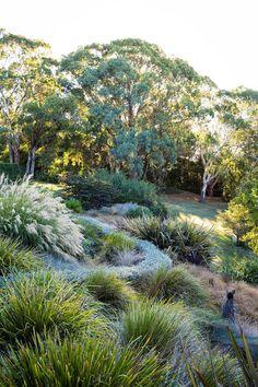 Coastal Gardens, Beach Gardens, Outdoor Gardens, Australian Garden Design, Australian Native Garden, Australian Bush, Bush Garden, Garden Trees, Tropical House Plants