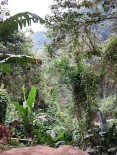 De oerwouden van Colombia.