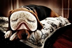 a d o r a b l e. but seriously why is this dog wearing a sleeping mask....
