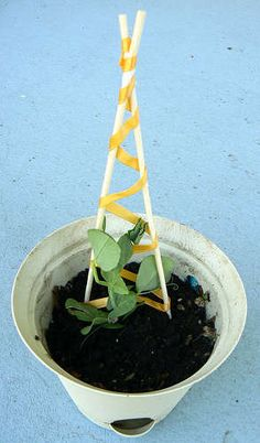 small trellis for climbing seedlings
