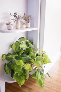 7-foolproof-secrets-to-decorating-with-plants-philodendron.jpg 2,000×3,000 pixels