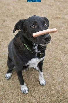 balancing a yummy sausage on the nose!