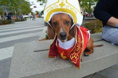 Get your fill of beer--and little dogs in little costumes!--at the Oktoberfest Dachshund Dash. Photograph by Ryan Weisser.
