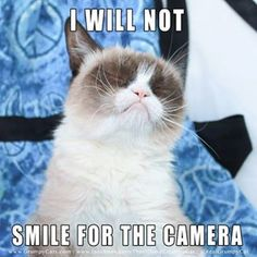 Details about Funny Cat Humor Grumpy Cat I Will Not Refrigerator Magnet - Grumpy Cat - Ideas of Grumpy Cat - The post Details about Funny Cat Humor Grumpy Cat I Will Not Refrigerator Magnet appeared first on Cat Gig. Grumpy Cat Quotes, Funny Grumpy Cat Memes, Cat Jokes, Animal Jokes, Funny Animal Memes, Funny Animal Pictures, Funny Cats, Funny Animals, Funny Memes