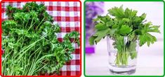 Parsley, cilantro, basil, and asparagus: place the stems in a container with water and leave them at room temperature (without washing them).If you don't want to put them in the refrigerator, it's … Cilantro, Edible Oil, Garlic Bulb, Stuffed Mushrooms, Stuffed Peppers, Ice Cube Trays, Dehydrated Food, White Vinegar, Fruits And Vegetables