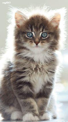 Decent Image Scraps: Cat Animation