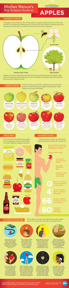 Mother Nature's Pop Science Guide to Apples - Infographic -  The apple is one of Earth's most iconic foods, symbolizing everything from health and beauty to evil and ingenuity. natural health tips, natural health remedies