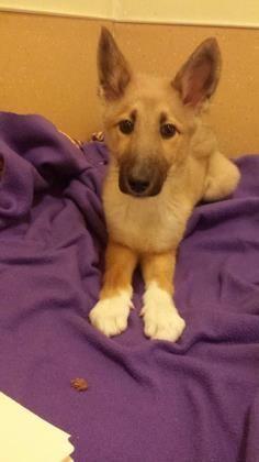 No Longer Listed Puppy Alert Petango Com Meet Tikka A 4