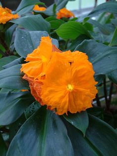 Tropical Plants with Orange Flowers - Be sure to visit GardenAnswers.com and download the free plant idenfication mobile app. Plant Identification, Free Plants, Orange Flowers, Tropical Plants, Mobile App, Garden, Lawn And Garden, Gardens, Outdoor