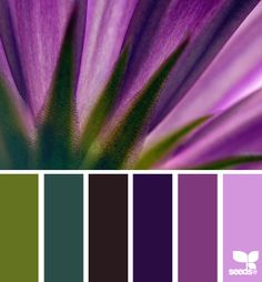 Radiant orchid palette inspiration from Design Seeds. designseeds.com