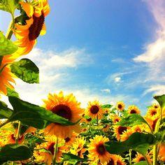It's late Summer! - @madolina   Webstagram