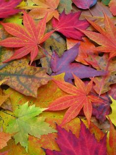 rainbow of #leaves