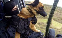 Dammartin-en-Goële: «Les chiens du GIGN portaient des gilets pare-balles» — 20minutes.fr
