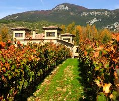 The Best Wineries of the World is an online exclusive guide of wineries and vineyards around the world. Search for the best wineries in the main wine regions. Wine tourism guide.