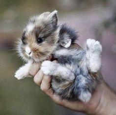 Cute bunny for life
