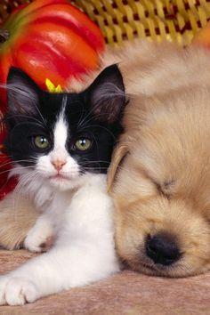 Gatto in compagnia di un bel cagnolino :-)