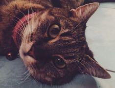 Tohle byla kočička adminky Mikky. Zemřela, když jí bylo úctyhodných 18 let.